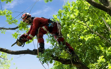 find trusted rated Cheshire tree surgeons