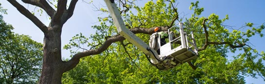 Cheshire tree surgery services