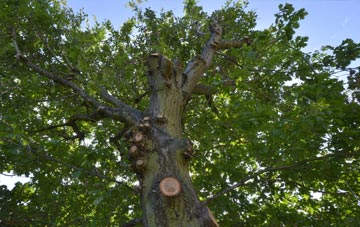 what is Cheshire tree surgery?